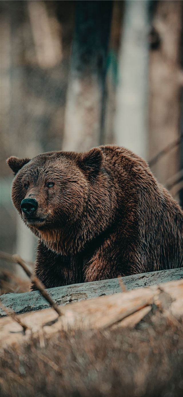 brown bear on brown wooden log during daytime iPhone X wallpaper