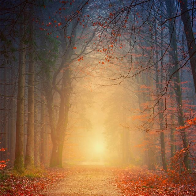 forest autumn 5k iPad wallpaper