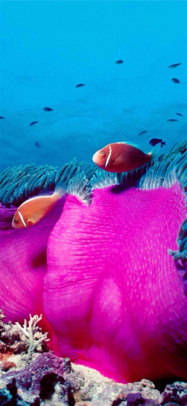 Clownfish for mac discord