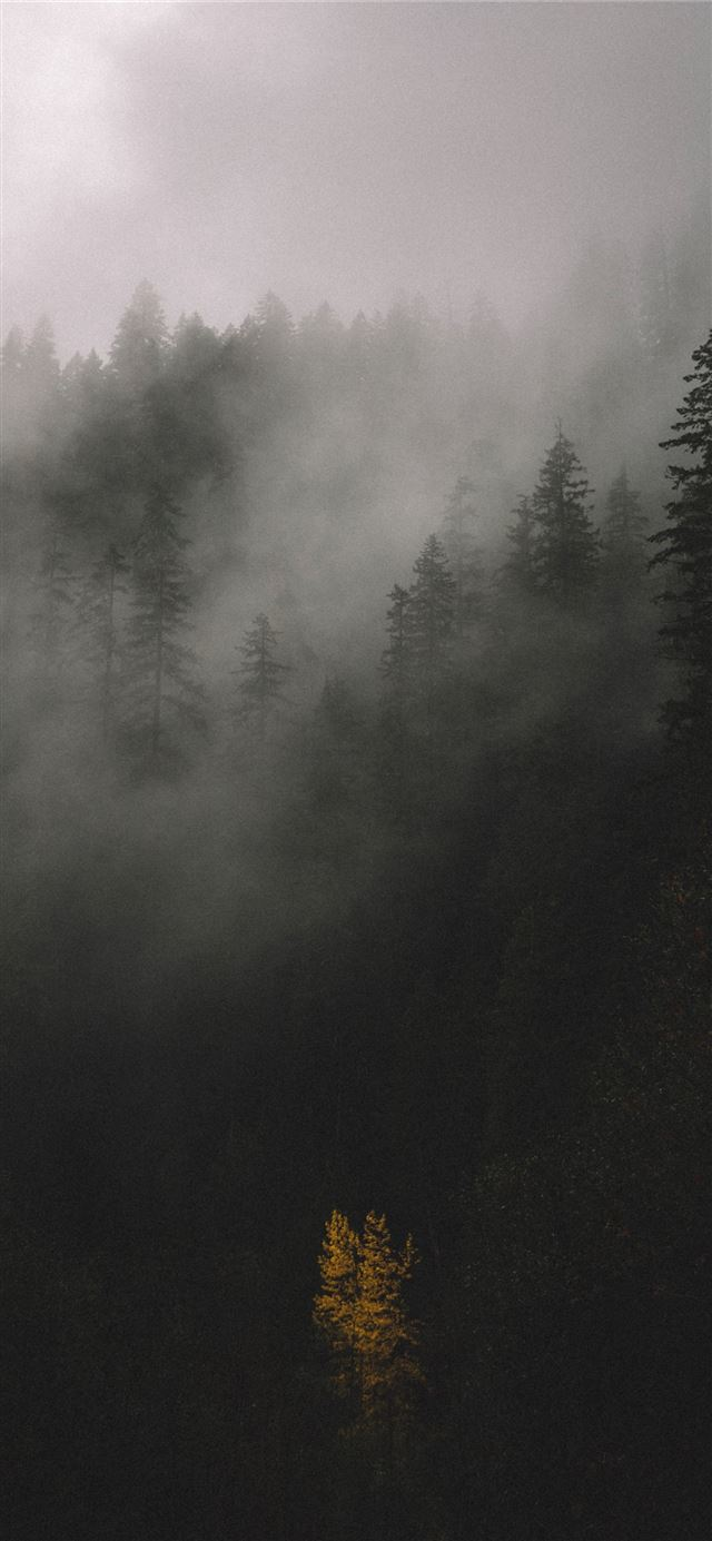 trees covered by fog iPhone X wallpaper