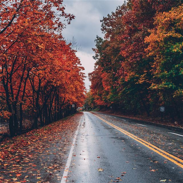 autumn road trees on sides fallen leaves iPad Pro wallpaper