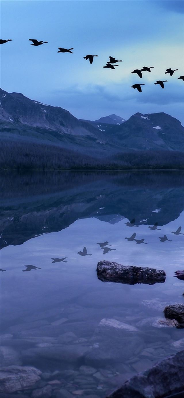birds mountains stones evening lake iPhone 11 wallpaper