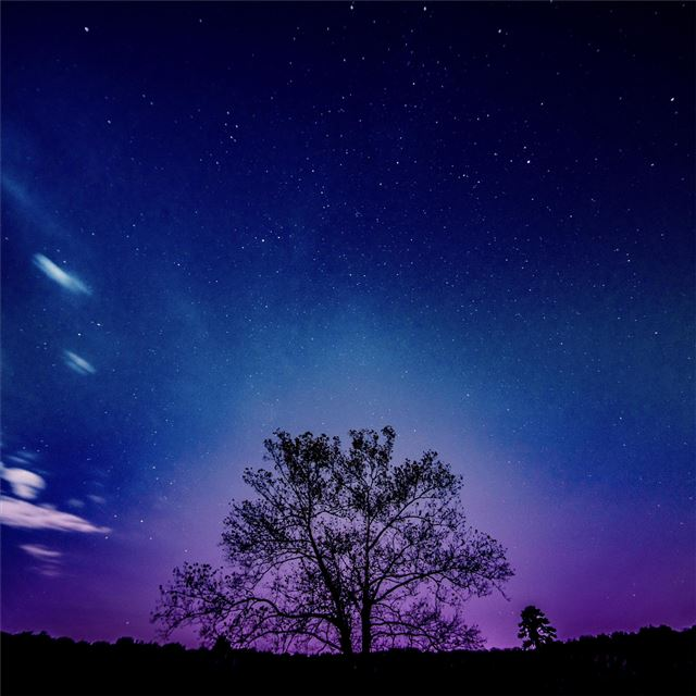 tree galaxy sky 8k iPad Pro wallpaper